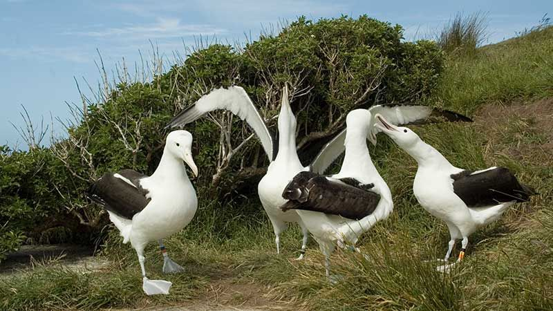 The Royal Albatross Colony, the Otago Peninsula