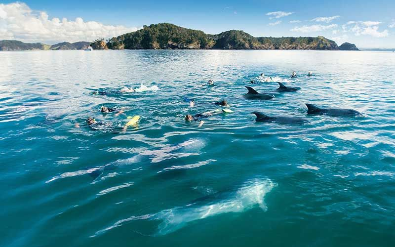Swim with dolphins in the Bay of Islands