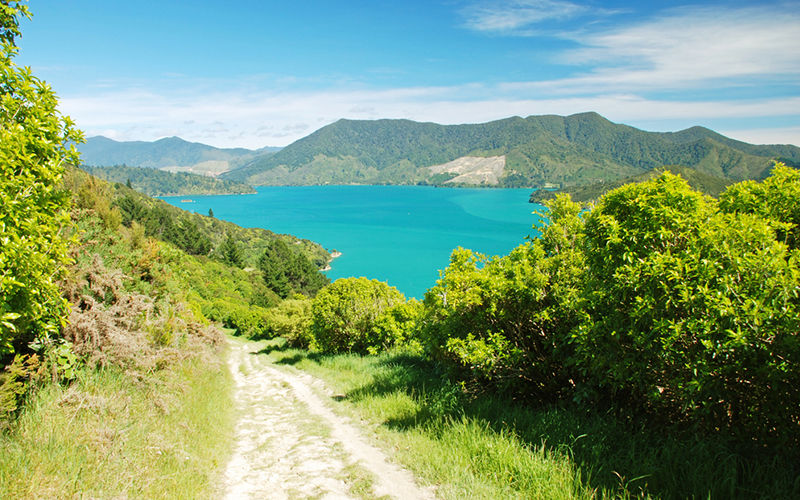 Hike the Queen Charlotte Track