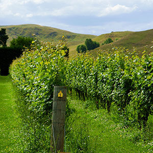 Wineries, North Island, New Zealand