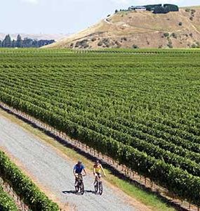 Bike tour through winery's of Hawkes Bay