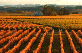 Sunset over the vineyards of Napier, Hawkes Bay