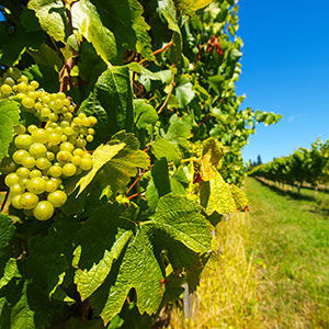Wineries and vineyards in New Zealand