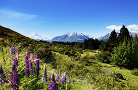 Spring time views, Mt Cook