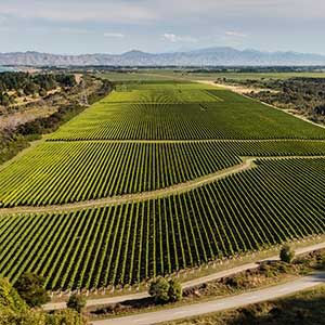 New Zealand vineyards and wineries