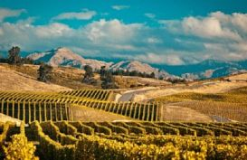A view of the Wairarapa Valley vines
